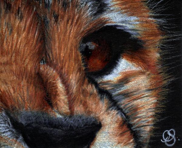 Cheetah by sn4pdr4g0n