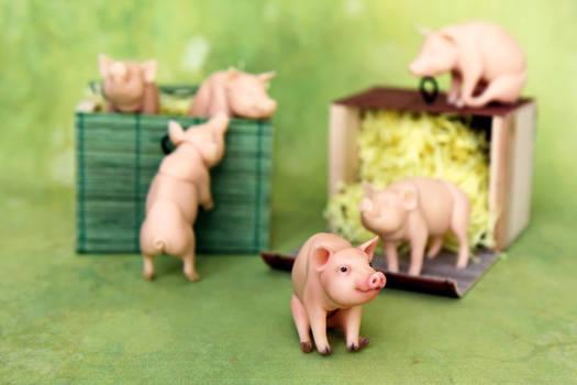 Mini pig - bjd