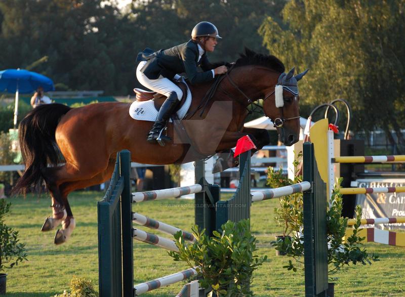 bay horse show - photo #19