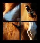 Chestnut Horse Collage