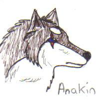 Anakin wolf by 1shewolf1