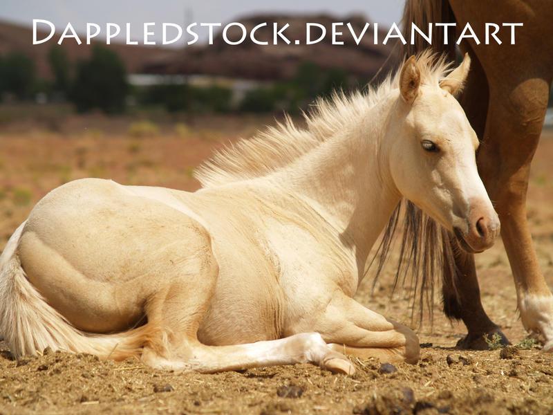 Erosaf's Foaling Thread Foal_01_by_dappledstock