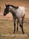 Foal 03