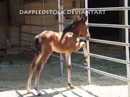 Foal 08 by dappledstock