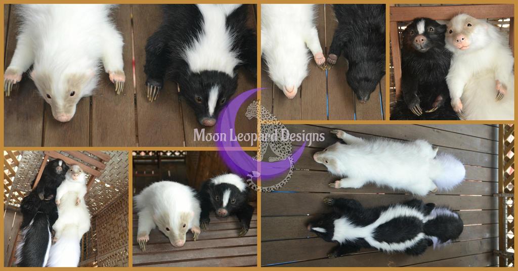 2 Skunks  by Moon-Leopard-Designs