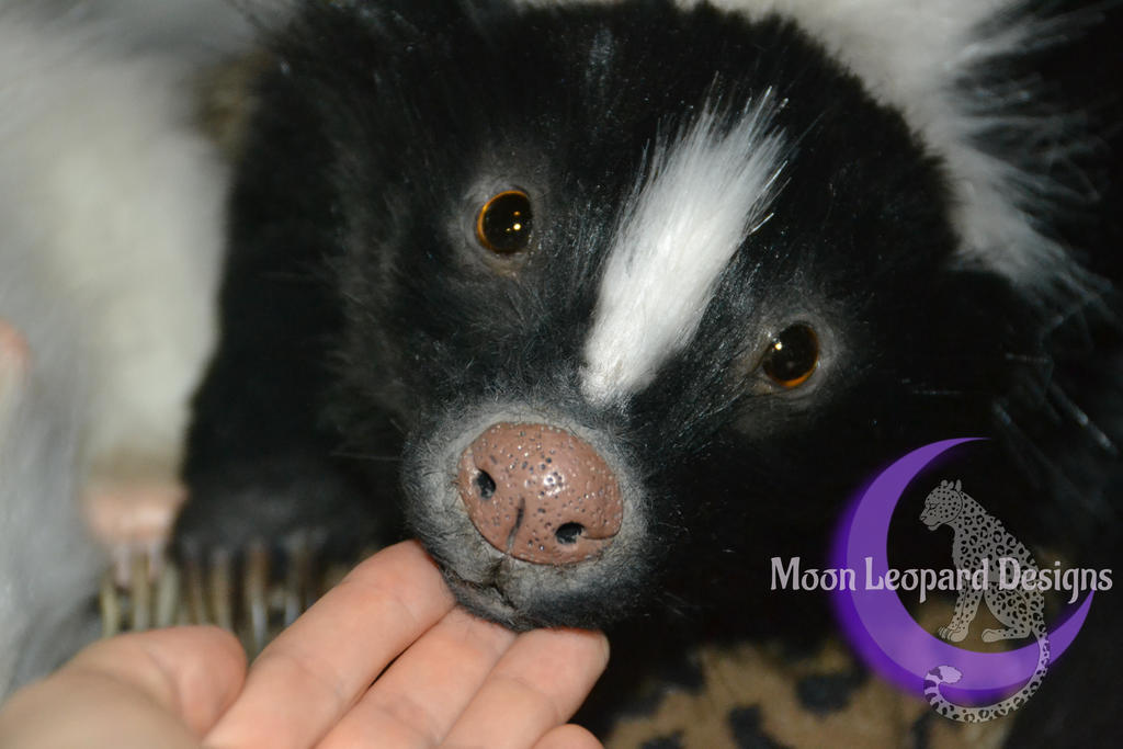 Skunk by Moon-Leopard-Designs