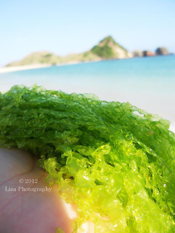 I See Seaweed by Lisa-Art