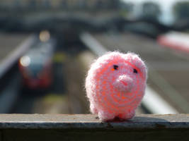 Haekelschwein in Lindau DE by Thonixx