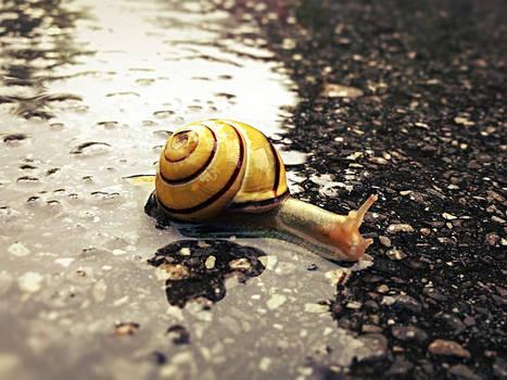 Slow down. Take it easy.