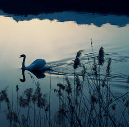 Swan Lake by RockNRoll-Suicide