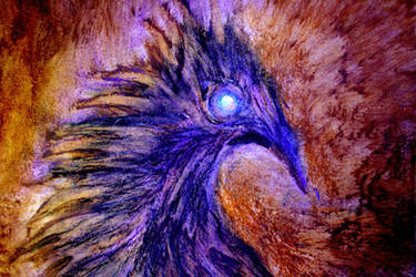 Phoenix by Nat-photography