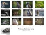 Animals Calendar - 2019 by Yuukon