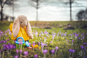 Spring is here! (2021)