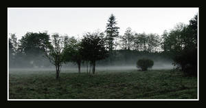 Foggy Field I