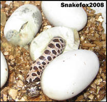 BABY SNAKES FTW by Snakefox