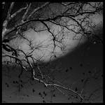 Black Birds. by NerminKrupic