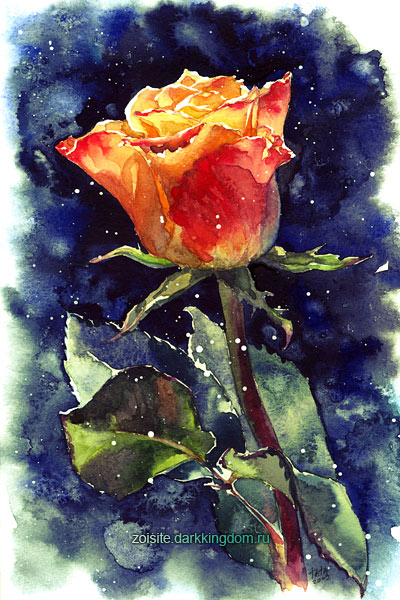 December Rose by kir-tat