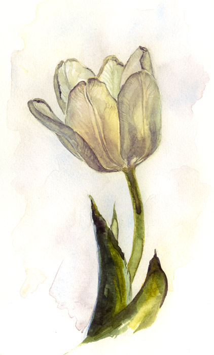 white tulip by kir-tat