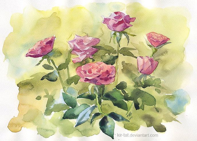 roses by kir-tat