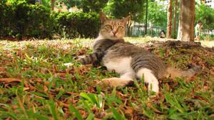 kitty suntannin by tnemgarf
