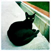 curled black