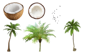 Coconut and tree PNG