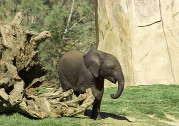 Elephant Baby by TheLazyFox