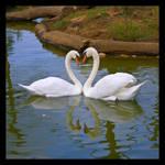 Two Swans by SilentXeno