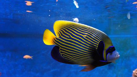 blue fish freebii by piaglud