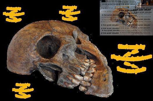 skeleton head DSC04198red