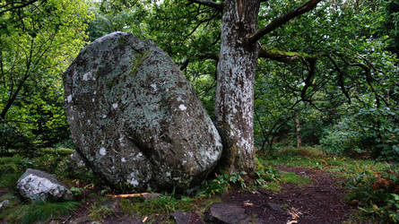 stone and tree DSC02638red