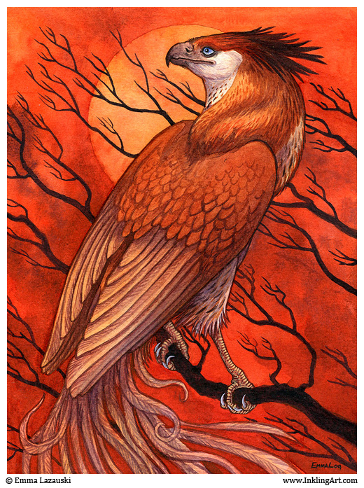Crested Firehawk by emla