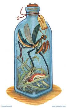 Bottled: Bugs!