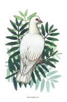 Peace Dove by emmalazauski