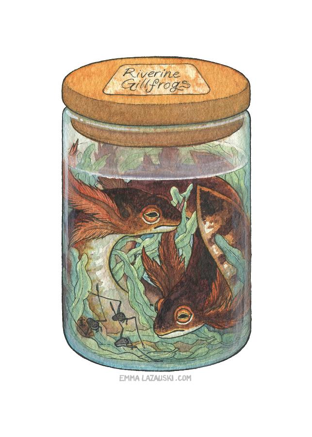 Bottled: Gillfrogs by emmalazauski