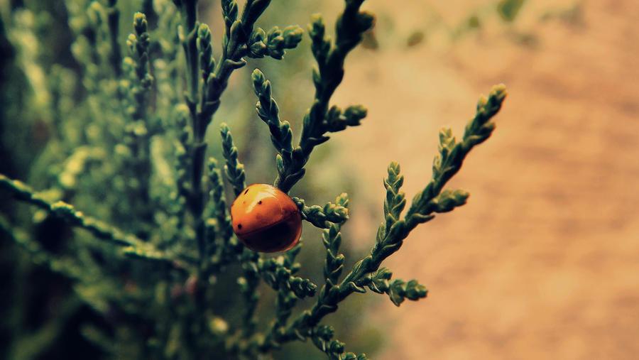 Ladybug by RicheliVargas