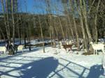 Snow BAAA