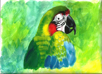 Macaw by Cyneburg