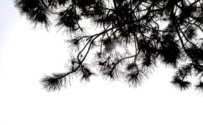 shapes in the branches