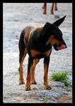 The Tongue of the DOBERMAN