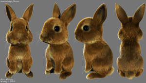 Bunny by Woodys3d