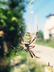 Arachnophobia by black-sway