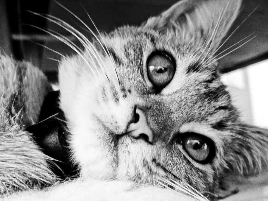 Kitty in black and white by black sway