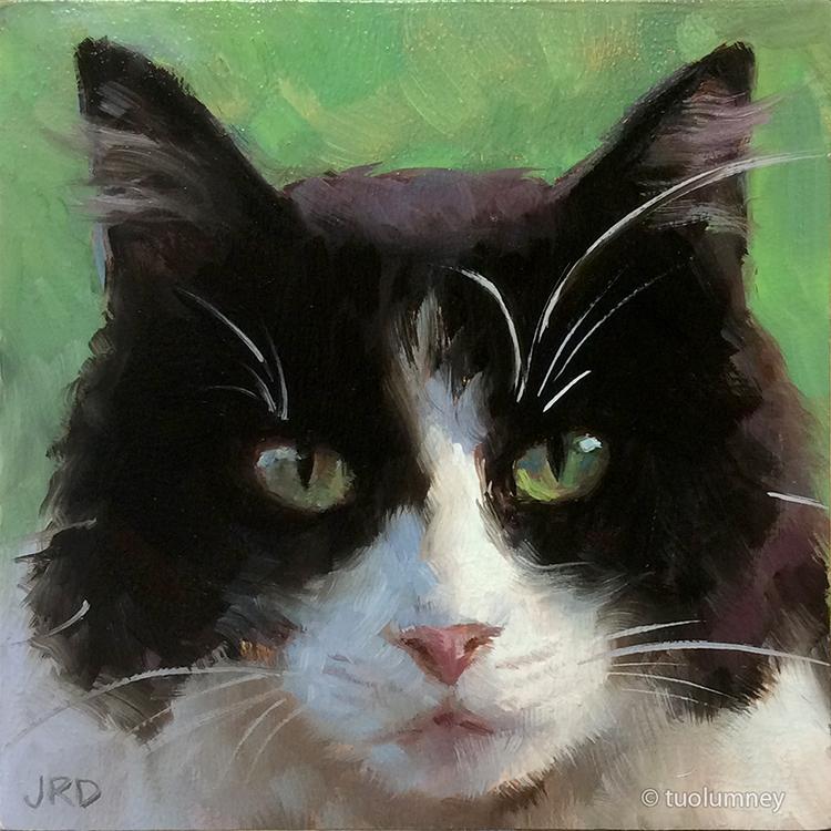 Fluffy Tuxedo Kitty by tuolumney
