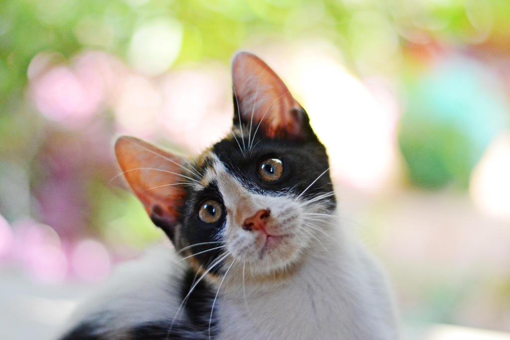 Kitten II by Alone-LostInParadise