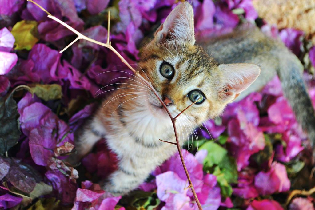 Kitten by Alone-LostInParadise