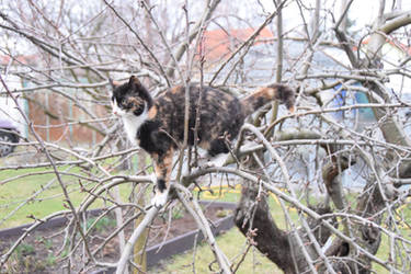 Cat on apple tree by Arcona