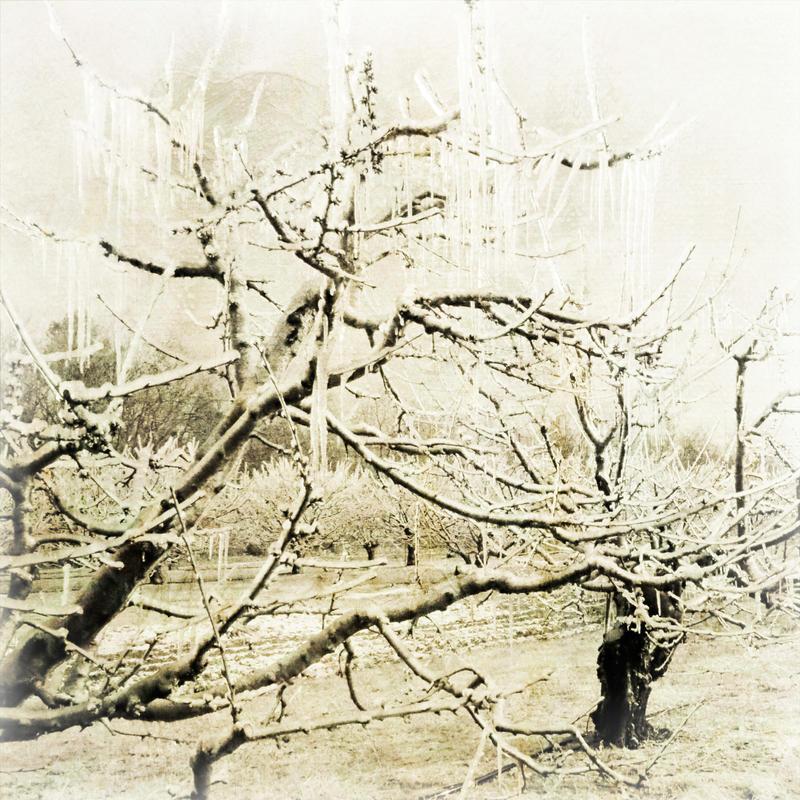 Apocalypsotree by NEOkeitaro