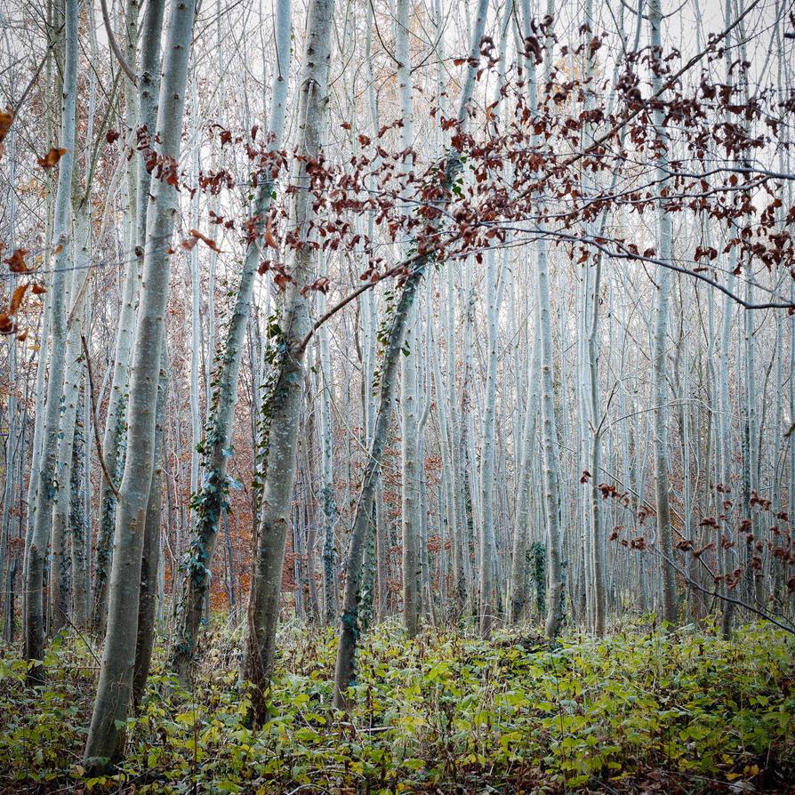 Versailles' Forest by NEOkeitaro