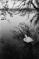White Swan by NEOkeitaro